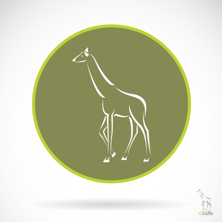 wildlife reserve: Vector image of an giraffe , illustration