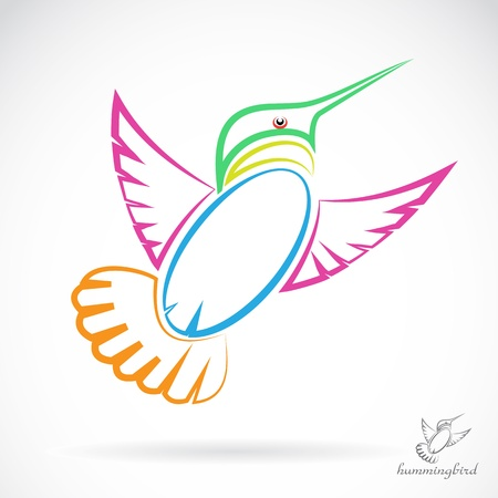 image of an hummingbird , illustration  Vector