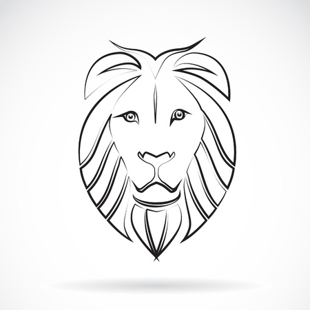 image of an lion , illustration
