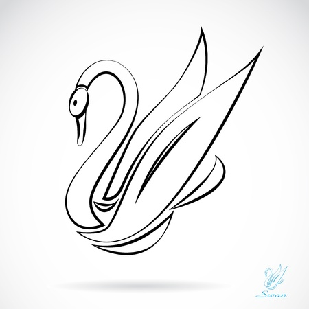 image of an swans , illustration  Vector