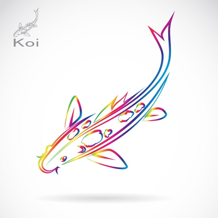koi fish pond: Vector image of an carp koi , illustration - vector Illustration