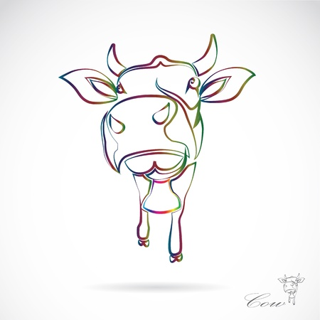 calf: Vector image of an cow on white background