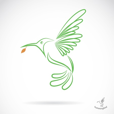 birds of paradise: Vector image of an hummingbird on white background