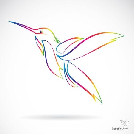 hummingbird: Vector image of an hummingbird on white background