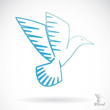 a bird on white background  Vector