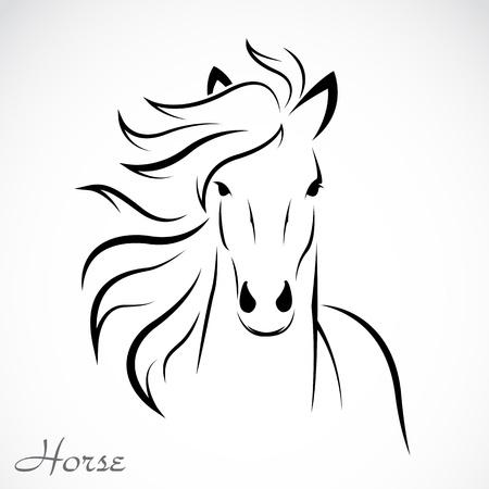 cabeza de caballo: un caballo en el fondo blanco