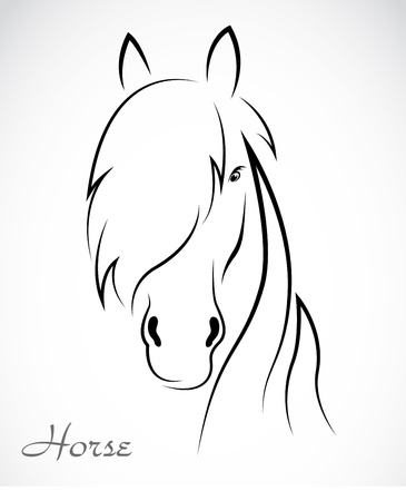 domestic horses: an horse on white background