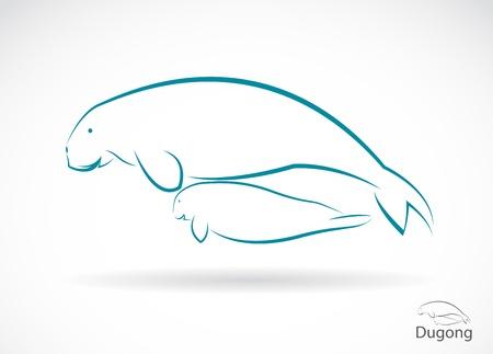 sea cow: dugong Illustration