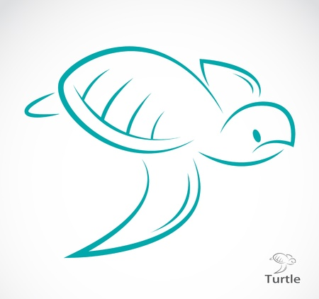 sea turtle: a turtle  Illustration