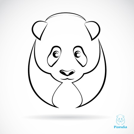 Vector image of an panda on white background  Vector