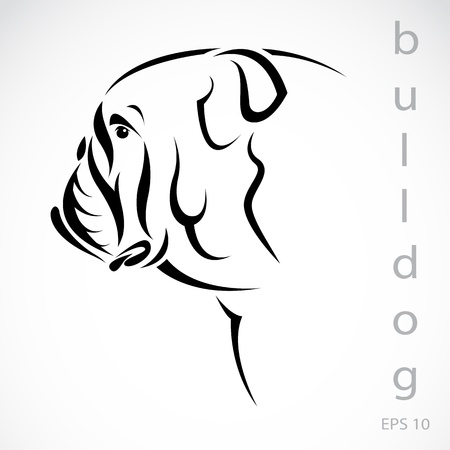 buldog: Vector de imagen de un perro (bulldog) sobre fondo blanco