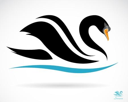 cisnes: Vector de imagen de un cisne en un fondo negro