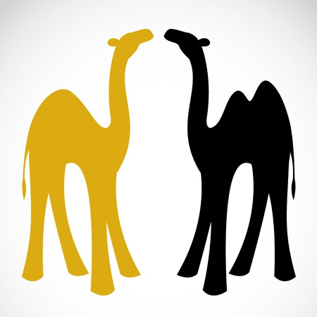 camels: Vector image of an camel on white background