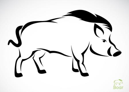 sanglier: Vecteur d'image d'un sanglier sur fond blanc