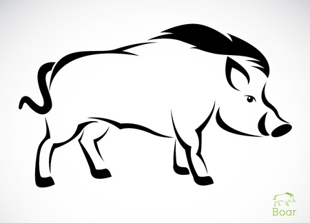 wild hog: Vector image of an boar on white background  Illustration