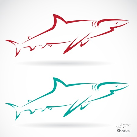 illustration of shark banner on white background Vector