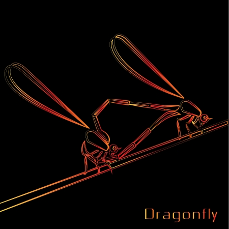 image of an dragonfly on black background  Vector