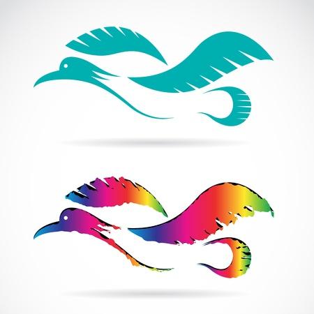 mallard: Vector image of an bird on white background Illustration