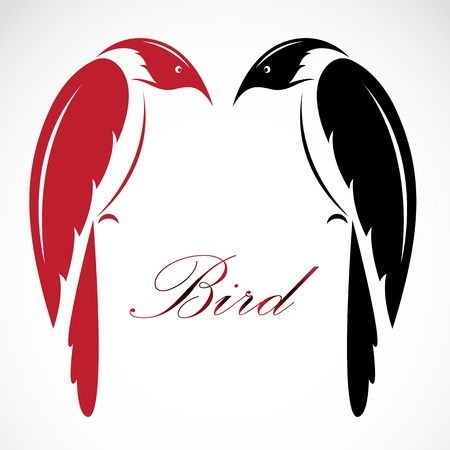 Vector image of an bird on white background  Vector