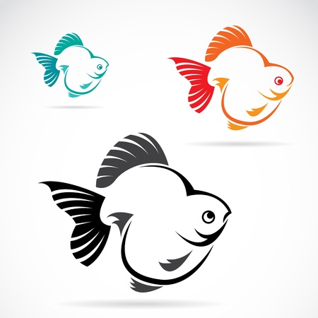 Vector image of an goldfish on white background  Vector