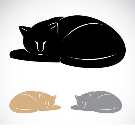wiskers:  Vector image of an cat on white background