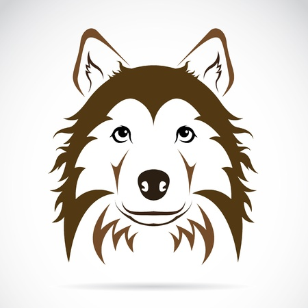 herding dog:  Vector image of an dog on white background  Illustration