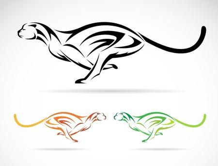 guepardo: Vector de imagen de un tigre de perro (guepardo) en el fondo blanco Vectores