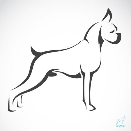 boxer: Vector de imagen de un boxeador perro sobre fondo blanco
