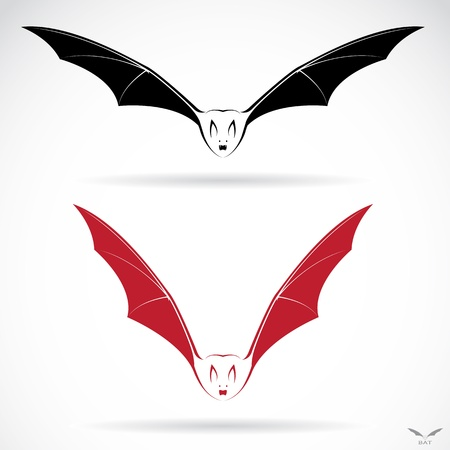 terror: Vector image of an bat on white background