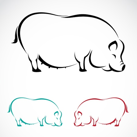 swine: Vector image of an pig on white background