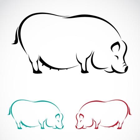 cerdos: Vector imagen de un cerdo en el fondo blanco