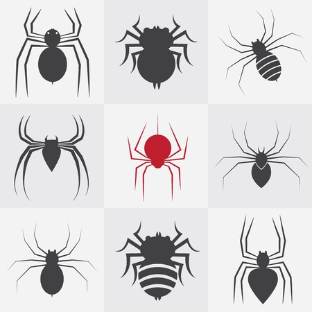 Set of vector spider icons on gray background