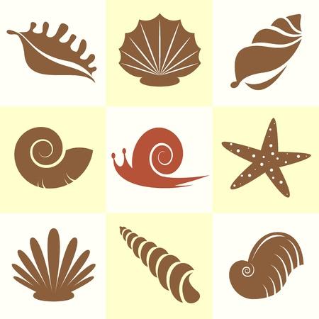 almeja: Vector colecci�n de conchas y caracoles Vectores