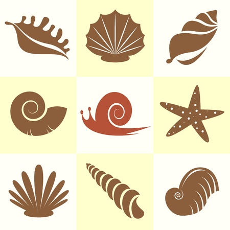 scallop shell: Vector collection of sea shells and snail