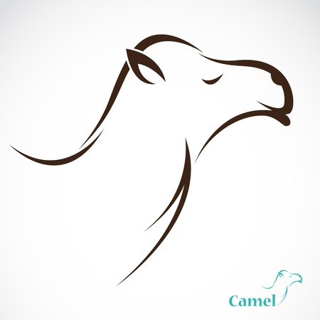 hump: Vector image of an camel on white background