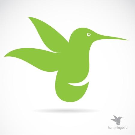 humming: Vector imagen de un colibr? sobre fondo blanco