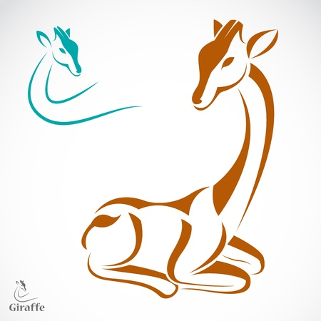 Vector image of an giraffe on white background