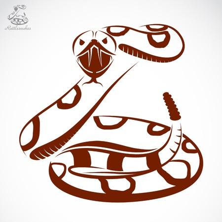 serpiente de cascabel: Vector de imagen de una serpiente de cascabel en el fondo blanco