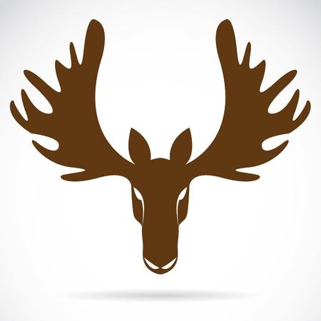 deer head: image of an deer head  on a white background