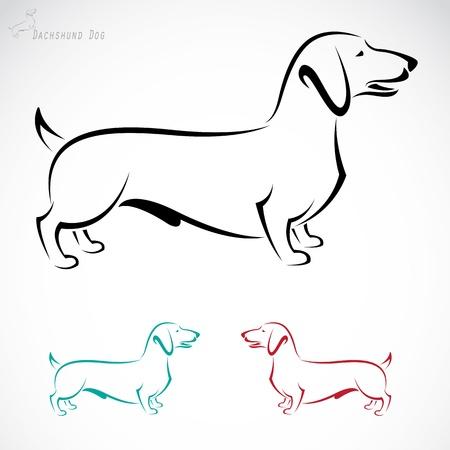 白い背景の上に犬のダックスフントのイメージ