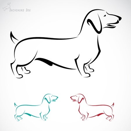 image of an dog  Dachshund  on a white background Vector