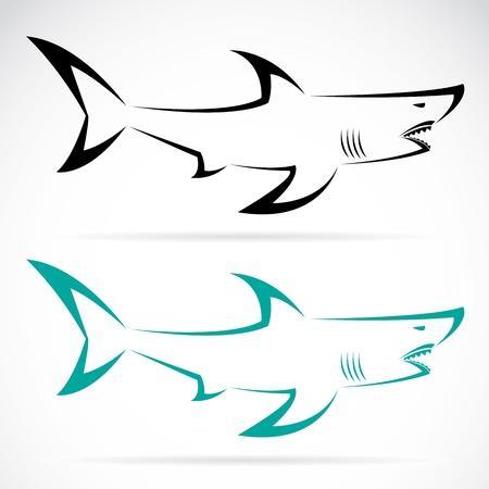 tiburones: imagen de un tibur�n en un fondo blanco