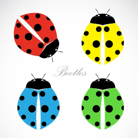 lady bug:  image of an beetles on white background
