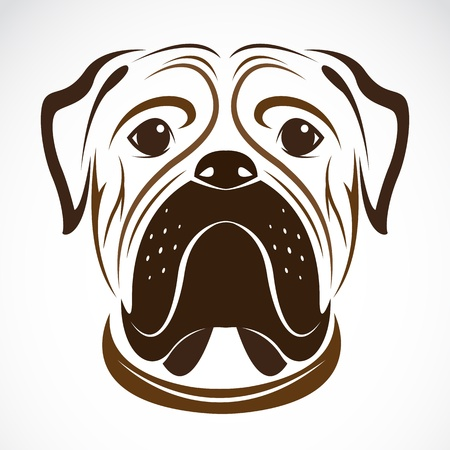 image of an dog (bulldog) on white background  Vector