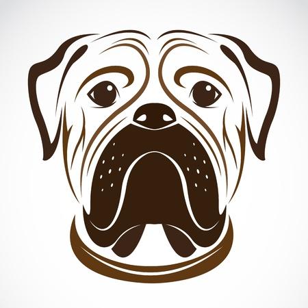 wrinkled face: image of an dog (bulldog) on white background