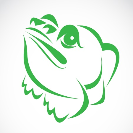 image of an frog on a white background Vector