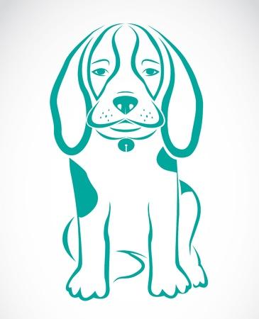 beagle perro sobre fondo blanco