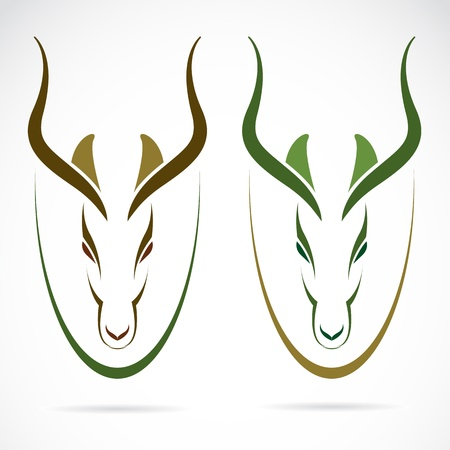 image of an head impala and horns. Vector