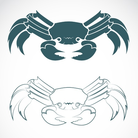 crabs: image of an crab on white background