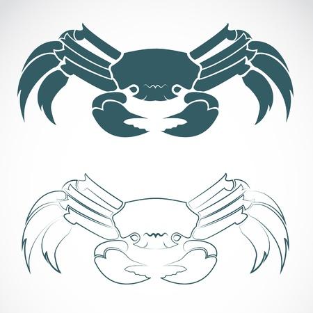 cangrejo: imagen de un cangrejo en el fondo blanco